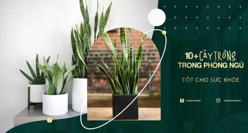 10 + Cây trồng trong phòng ngủ tốt cho sức khỏe